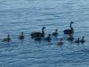 Fåglar i Åsnen